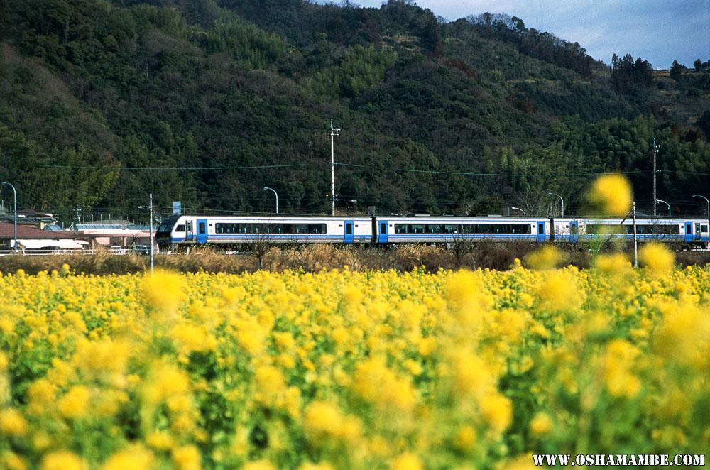 菜の花畑の横を走行する特急列車 菜の花畑の横を走行する特急列車 高知市から土讃線を西に進むと車窓